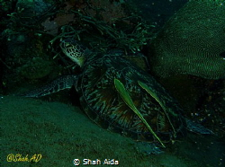 A wide angle shot in Dim View of Turtle,Was Taken with Ca... by Shah Aida